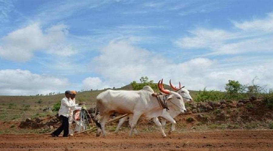 નીતિન પટેલનું બજેટ: પ્રધાનમુંત્રી કિસાન સન્માન યોજના હેઠળ 28 લાખ ખેડુતોને 1131 કરોડ ચૂકવાયા
