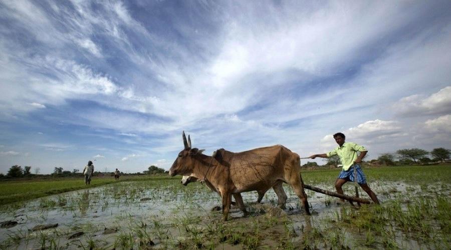 વાદળછાયા વાતાવરણમાં ખેડુતોએ શું કરવું જોઈએ? વાંચો આ મહત્વની ટીપ્સ