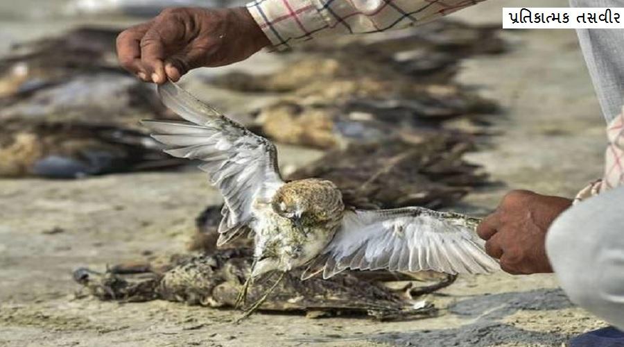 સુરેન્દ્રનગરમાં શિકારીઓએ 100 કરતાં વધુ પક્ષીઓને વિંધી નાંખ્યા, 50થી વધુ બંદુકની ગોળીઓ મળી આવી, ભારે રોષ