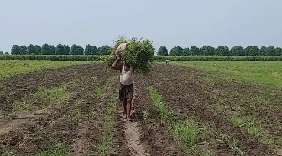 કેન્દ્ર સરકારના બિલો વિરુદ્વ રાજસ્થાન સરકારનું કૃષિ સુધારણા બિલ, ખેડૂત સતામણી પર 3 થી 7 વર્ષની કેદ, 5 લાખનો દંડ